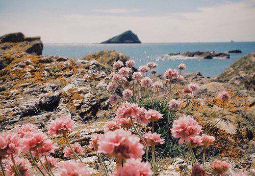 Kukat kalliolla