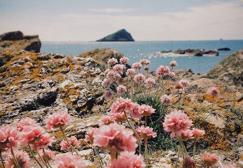 2 island flowers