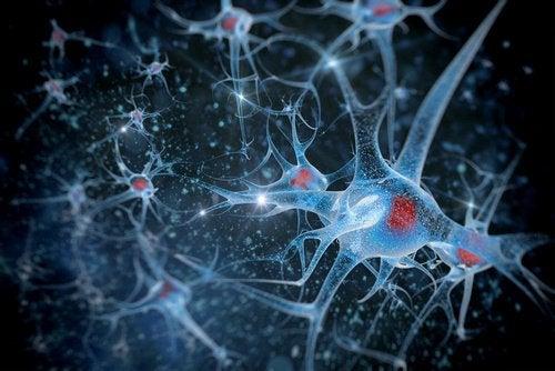3 brain health