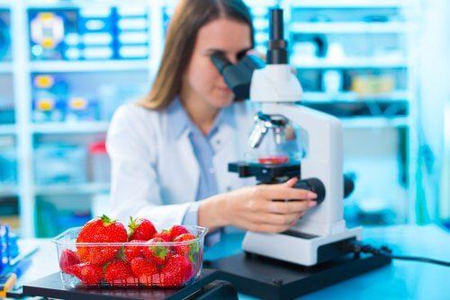 Mansikat laboratoriossa