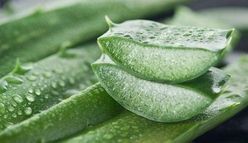 Aloe vera for hemorrhoids