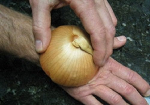 Applying an onion to a bug bite