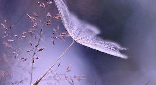 fragile-dandelion