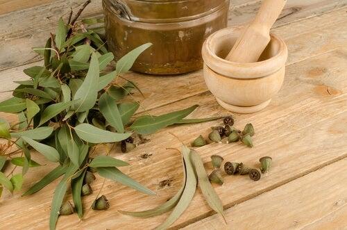 Eukalyptus auttaa torjumaan hyönteisiä.
