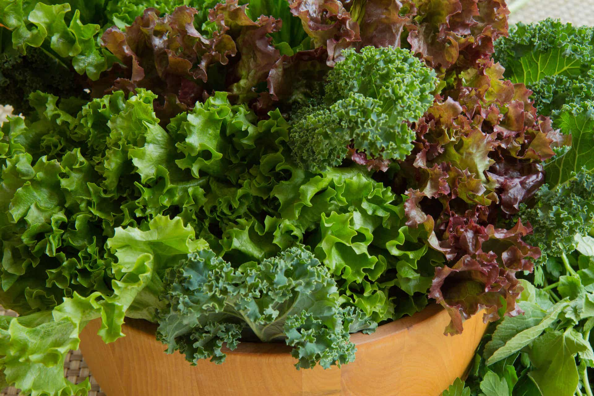 Red and green lettuce in a bowl.