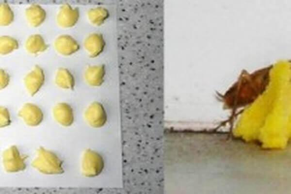바퀴벌레 죽이기