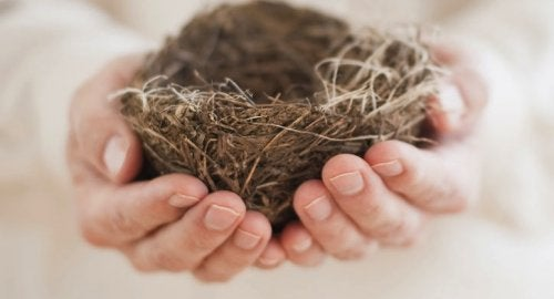 Empty Nest Syndrome: When Loneliness Invades the Home