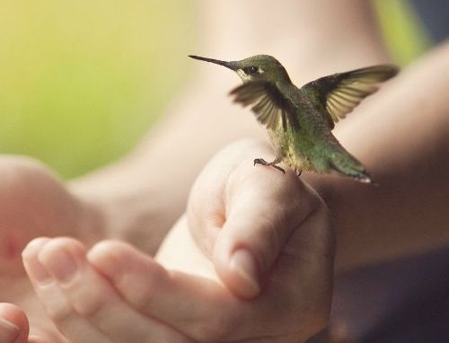 A hummingbird on someone's hand.