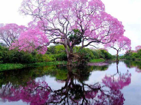 2-tree-reflection-lake