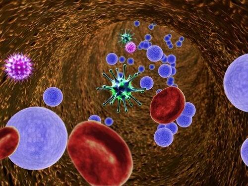 Immuunijärjestelmä