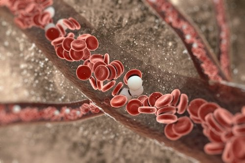 Image of blood cells inside the body