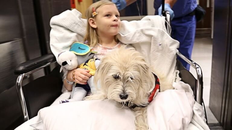 At some hospitals, pets visit patients.
