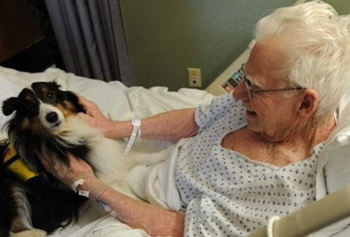 Pets Visit Patients in This Hospital