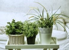 plants-for-your-room