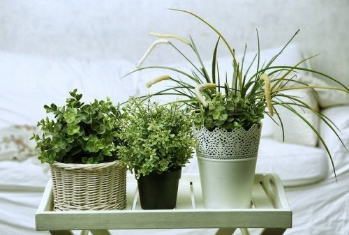 6 Perfect Plants for Your Room to Help You Sleep