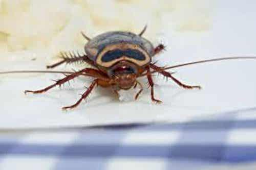 How to Get Rid of Insects in Your House