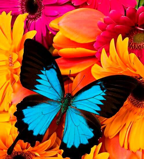 Colors affect your feelings blue black butterfly with orange and pink flowers
