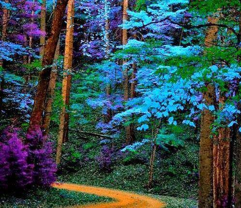 Blue purple green flowers in forest colors affect your feelings