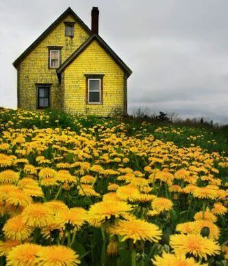 Yellow house with yellow flowers field cloudy skies colors affect your feelings
