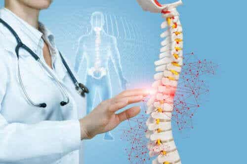 The Importance of Your Spinal Column and Its Connection to Other Organs