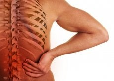 The Relationship Between the Spine and Organs