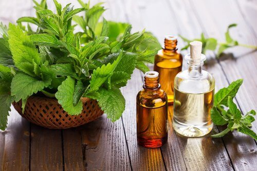 Three bottles of mint essential oil