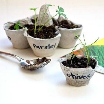2-seeds-germinate