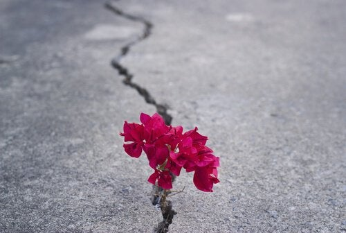Some flowers growing in pavement.