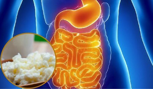 How to Restore Your Intestinal Flora Naturally