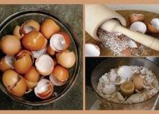 Using Eggshells