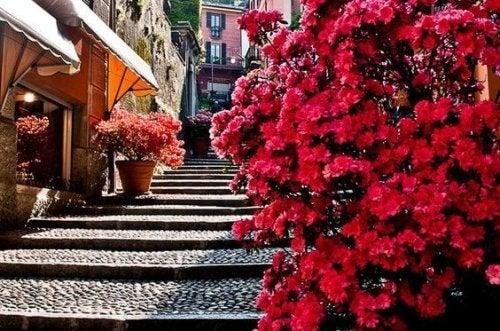cityscape-flowers