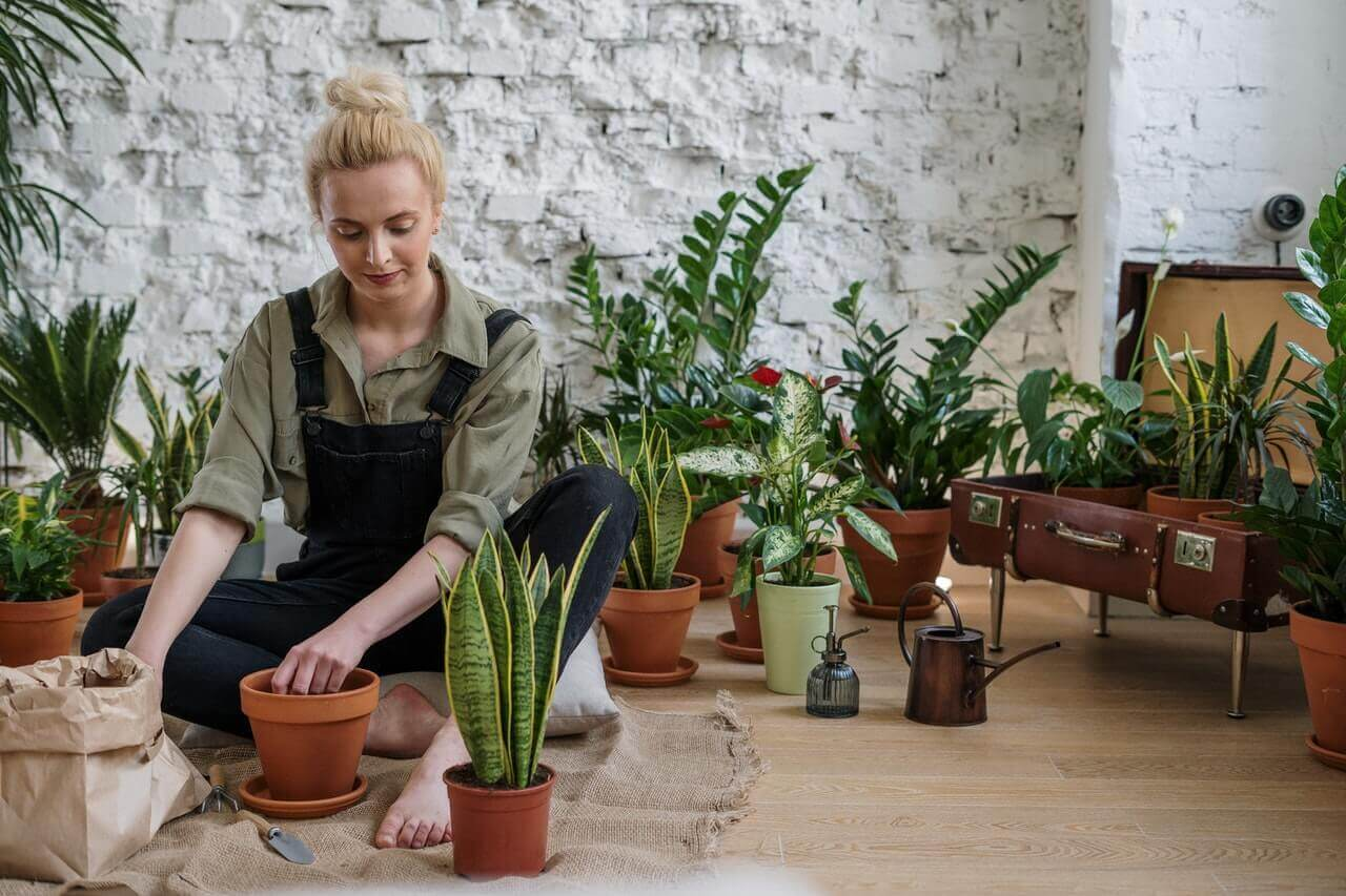 A woman potting house plants.