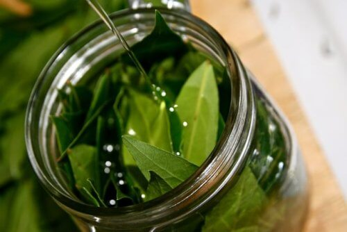 The Incredible Benefits of Bay Leaf Oil