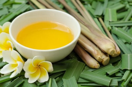 Citronella Oil: a Mosquito, Lice and Flea Repellent