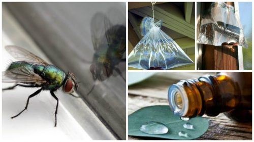 7 Homemade Solutions for Houseflies