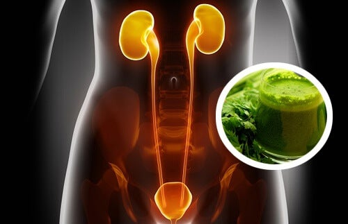2 Diuretic Juices That Will Help Cleanse Your Kidneys