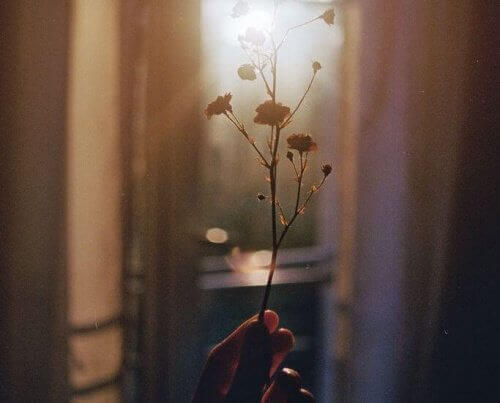 Small flowers against sunlight representing value