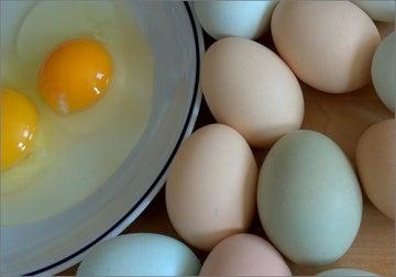 erilaiset kananmunat