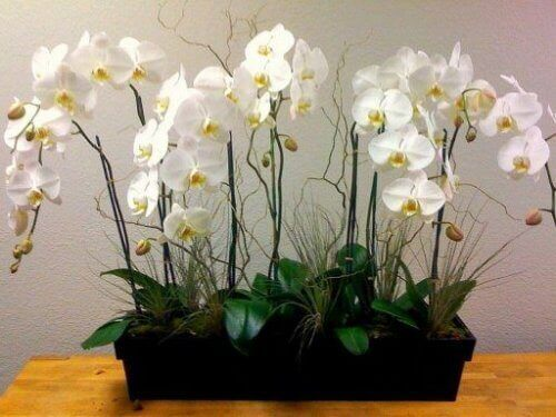 Orchids are plants that purify the air