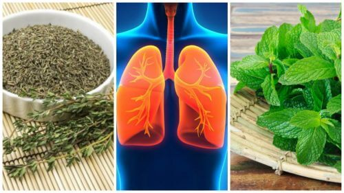 8 Herbs You Can Use to Improve Your Lung Health