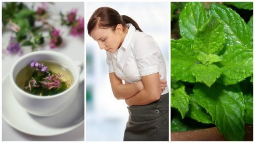 5 Healing Herbs for Irritable Bowel Syndrome