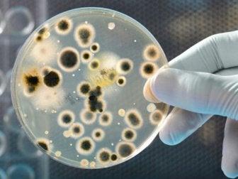 bacteria shown on scientific slide