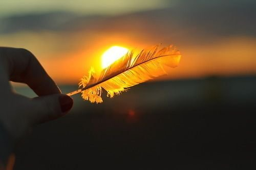A feather covering up the sun