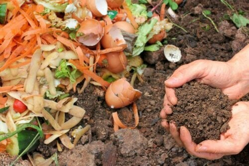 Compost for plants.