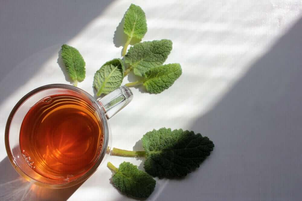 A cup of sage infusion.