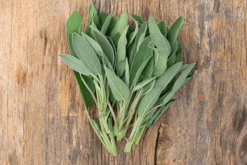 Sage leaves to improve lung health