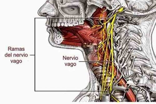 How To Wake Up Your Vagus Nerve For Whole Body Health Step To Health