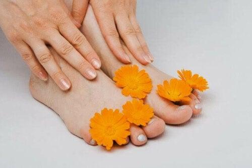 Common marigold on the feet.