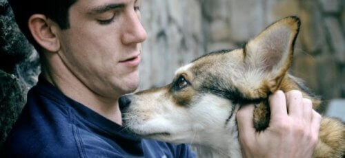 Animal assisted therapy dog and man first year university students fight homesickness with animal therapy