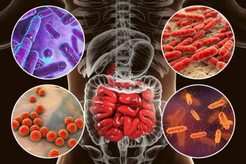microbiotic in the human body close up